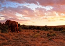 Addo_Elephant_Nationalpark